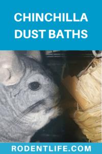 Why do chinchillas bathe in dust?