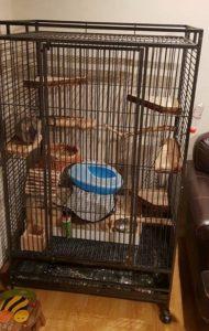 a large Chinchilla Cage