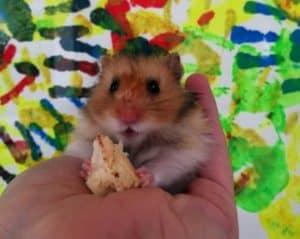 Cute Hamster In Hand