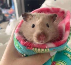 Hamster in Sock