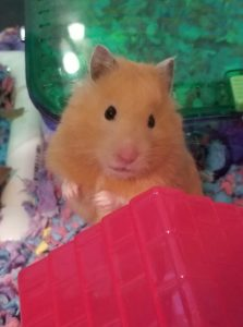 Mindy's Hamster