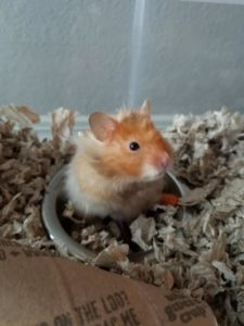 Theo The Hamster 2