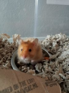 Theo The Hamster 3
