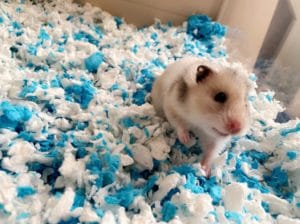 Very Sweet Hamster in His Cage