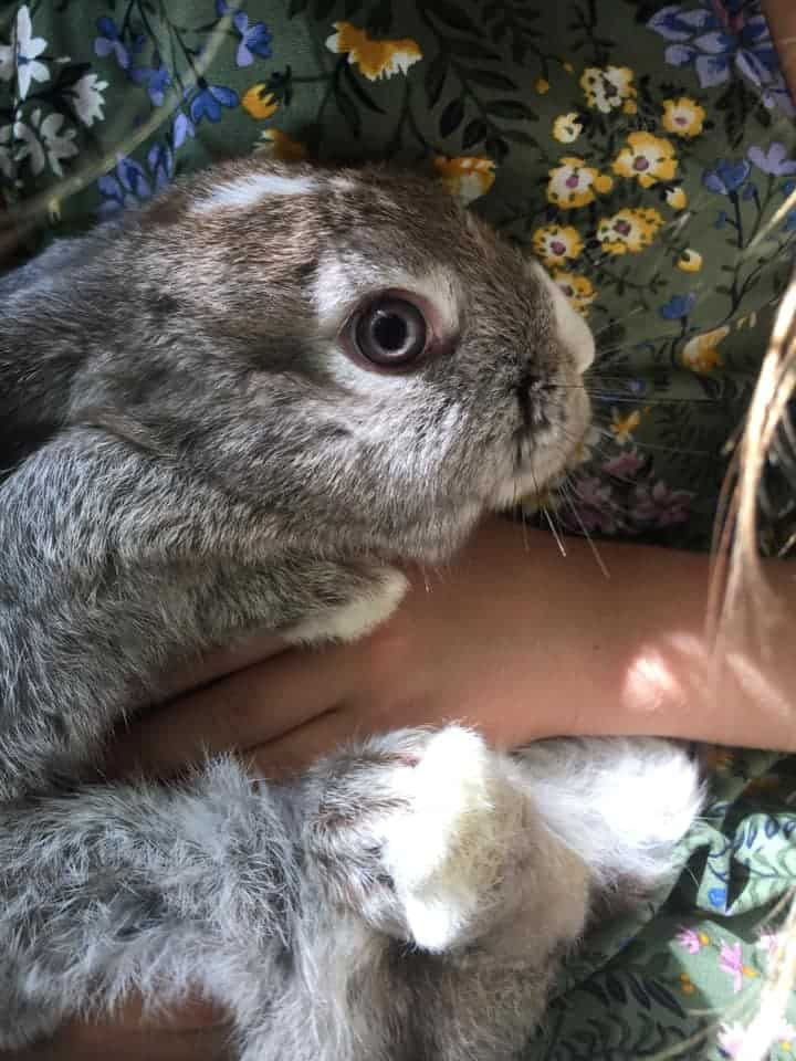 Big Eye Rabbit