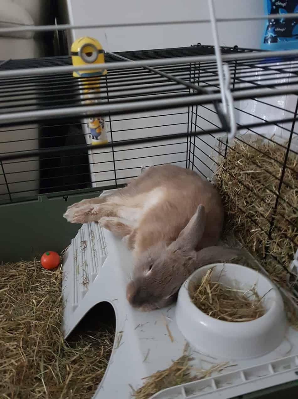 Can Rabbits Eat Chinchilla Food? Dietary Requirements, Hay, Pellets and  Treats - Rodent Life